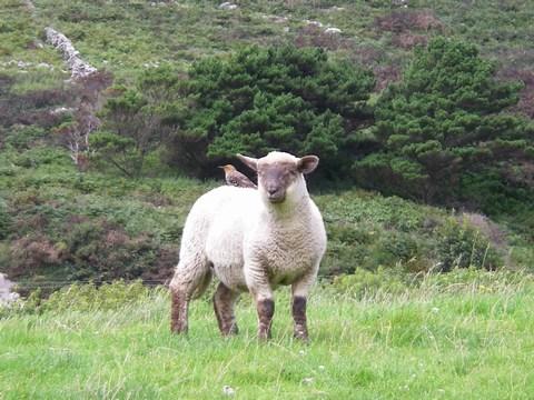 mini-03-Sheep and little bird.JPG