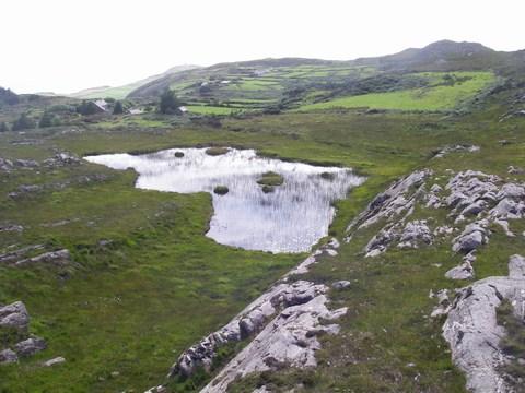 mini-14-Petit étang.JPG