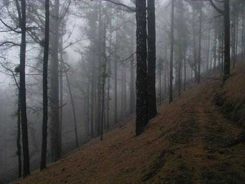 57-Les nuages envahissent la foret de pins.JPG